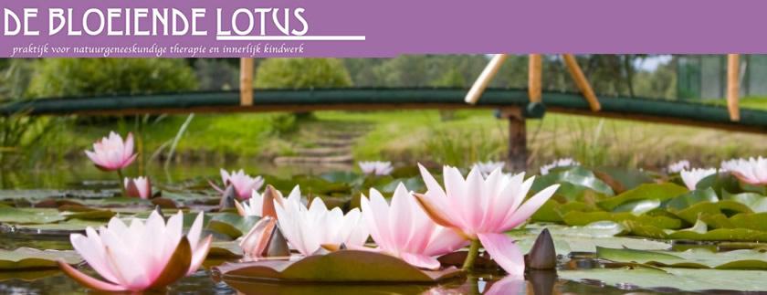 ontspanningscursus de bloeiende lotus in garsthuizen