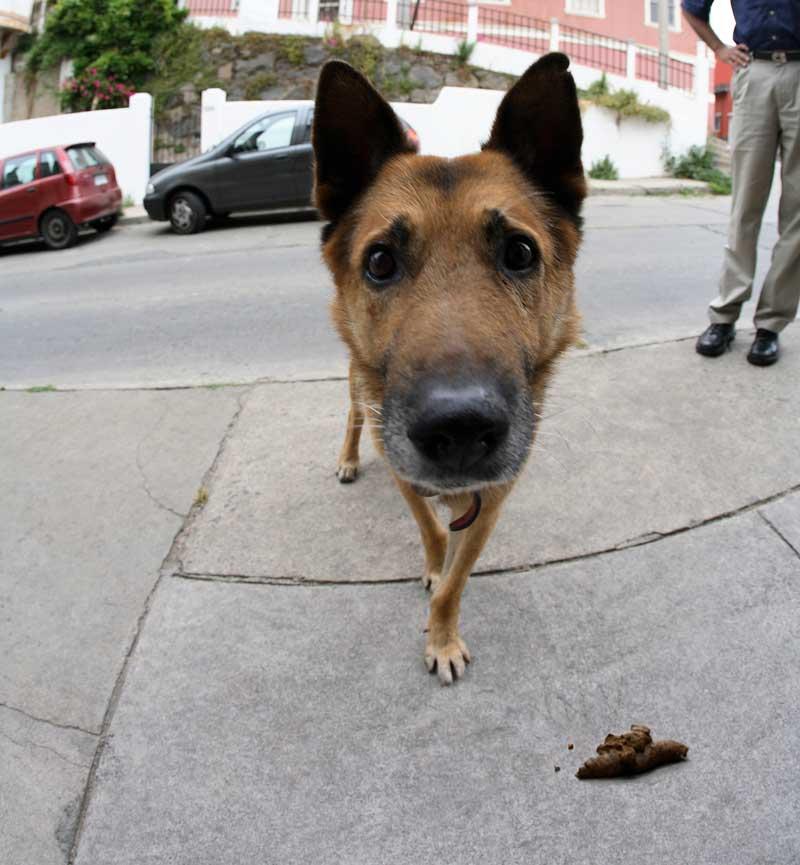 een-hondenkakje-hoort-in-het-zakje